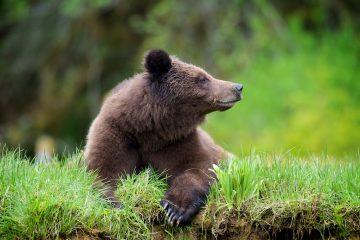 blog%2520pix_1Feb2014_grizzly_0