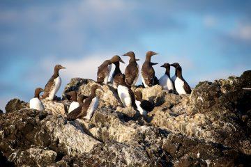blog%2520pix_1Feb2014_seabirds_0