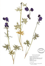 HerbariumPrintAdelph_1