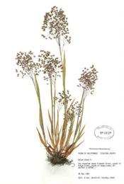 HerbariumPrintBminor_9