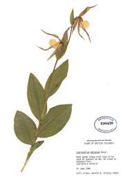 HerbariumPrintCmontanum_19