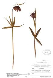 HerbariumPrintFaffinis_4