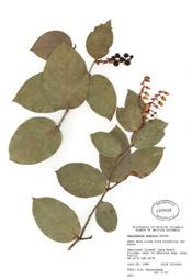 HerbariumPrintGshallon_17