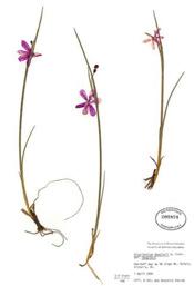 HerbariumPrintOdouglas_3