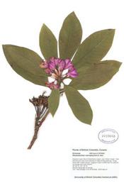 HerbariumPrintRmacro_21