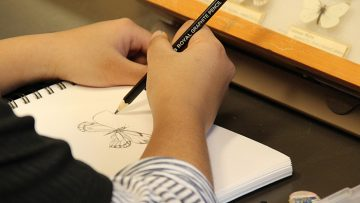 A person draws a butterfly in a notebook