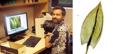 (Left) Felipe Osorio in the herbarium office. Photo: Saskia Wolsak (Right) Bryum alpinum, taken by Felipe Osorio at the UBC Herbarium.