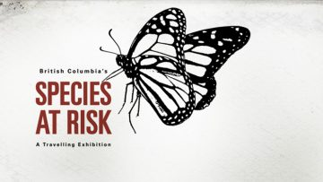 species-at-risk-web