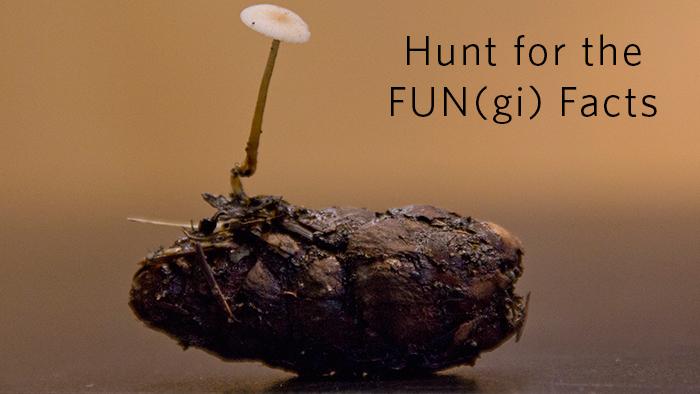 mushroomhunt