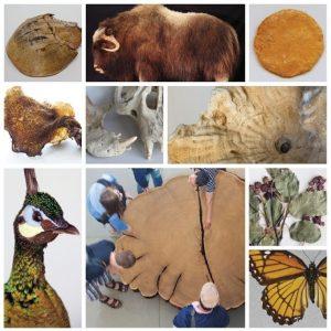 various museum specimen photographs in a grid